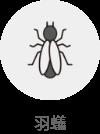 羽蟻(対象生物)