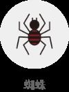 蜘蛛(対象生物)